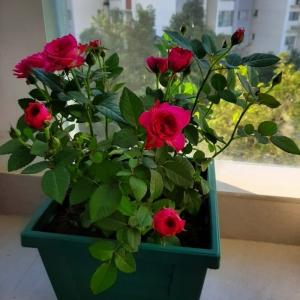 Cung cấp chăm sóc hoa & cây cảnh văn phòng